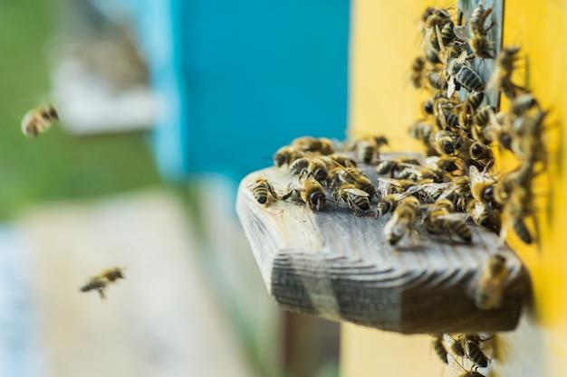 Aus dem bienenstock schleichen sich die bienen heraus.