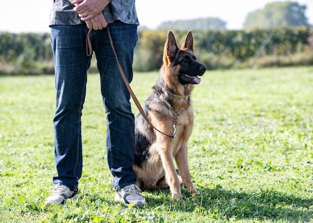 Ausbildung zum deutschen schäferhund und gehorsam in der natur