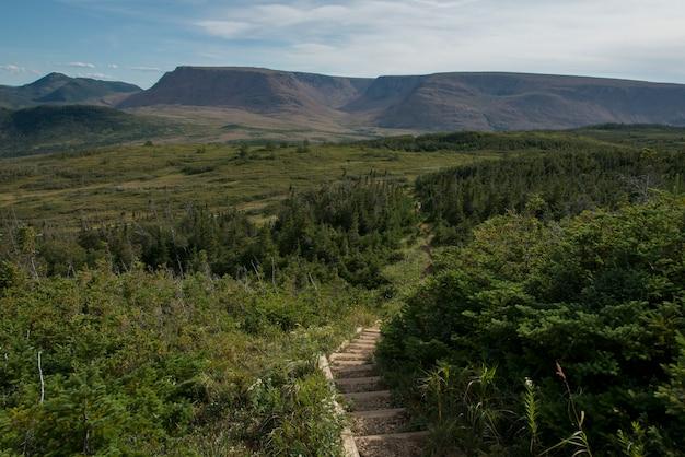Ausblick-spur und ausblick-hügel in gros morne national park, neufundland und labrador, kanada