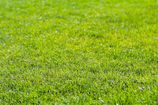 Ausführliche szene der nahaufnahme des frischen grünen hellen grases am sonnigen sommertag. schön gemähter rasen. schöner rastplatz.