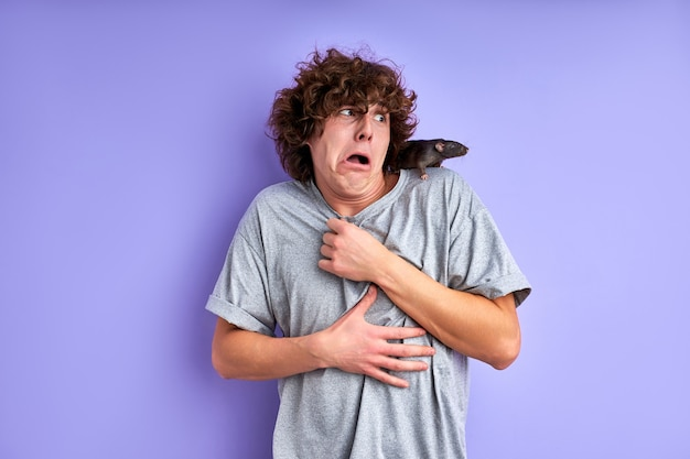 Ausgebildete dekorative ratte klettert krabbelnd auf das t-shirt des mannes. mann ist verwirrt und verängstigt, steht ratlos da, kann sich nicht bewegen