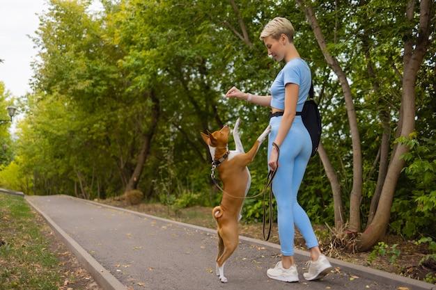 Ausgebildeter intelligenter hund, der nahrung vom menschen nimmt.