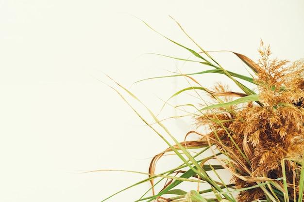 Ausgeschnittenes bild von dekorativen getrockneten pflanzenzweigen