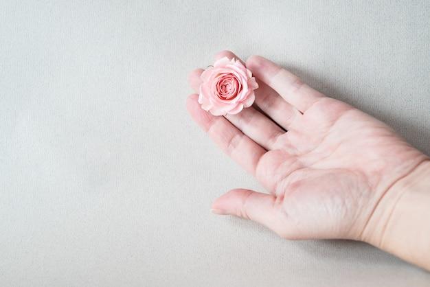 Ausgestreckte hand der frau mit einer rosa rose, die auf handfläche liegt