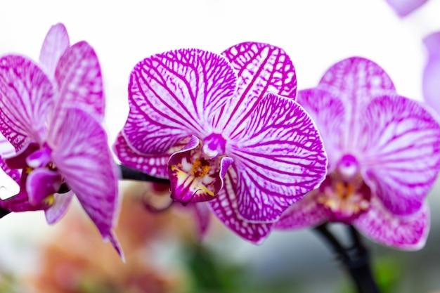 Ausgewählte gartenorchideenblume für dekor