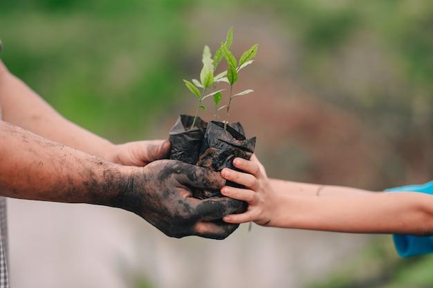 Aussaat von baum und hand von erwachsenen und kindern zum einpflanzen in erde