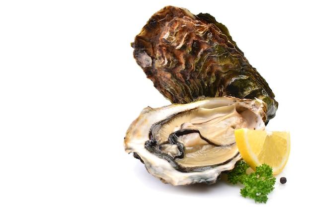 Austern auf weiß mit zitrone
