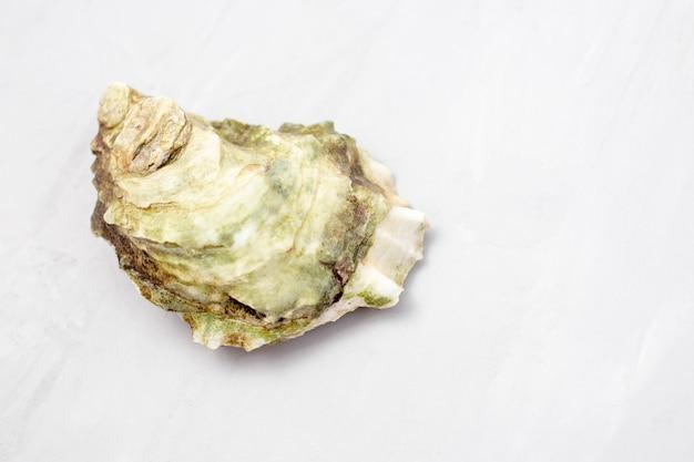 Austern auf weißem hintergrund, nahaufnahme