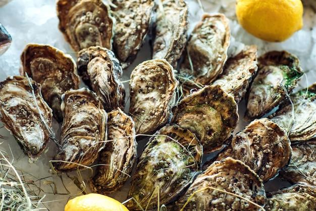 Austern und andere meeresfrüchte auf eis.
