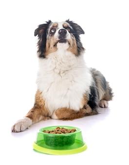 Australischer schäferhund essen