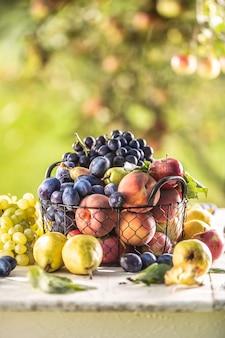 Auswahl an frischen früchten auf einem gartentisch in einem drahtkorb.