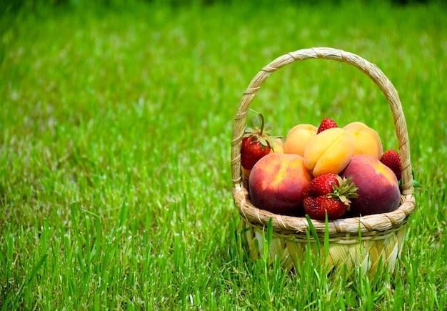 Auswahl an frischen reifen bio-früchten und beeren: pfirsiche, aprikosen und erdbeeren. bauernhoffrüchte im korb auf grünem gras im garten.