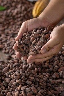 Auswahl der fertigen kakaosamen muss vorher in säcke getrocknet werden