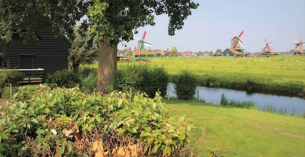 Authentische holländische landschaft an einem schönen tag