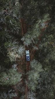 Auto fährt auf einem weg in einem wald