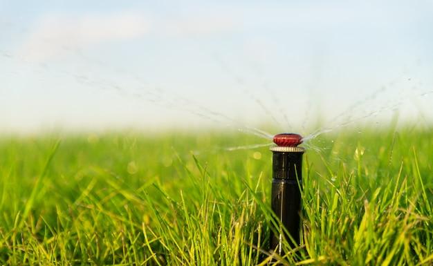 Automatischer sprinkler, der den rasen bewässert. bewässerungssystem. rasenpflege. nahansicht.