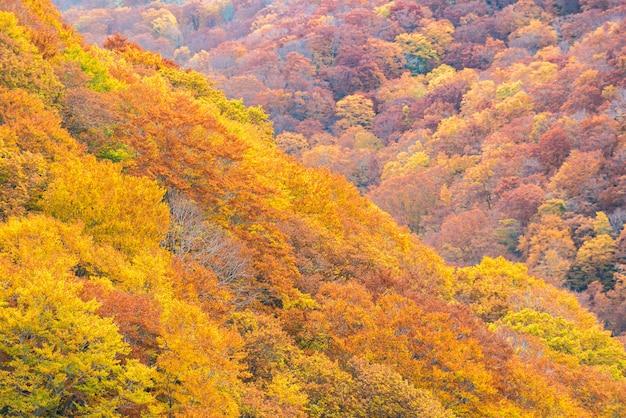 Autumn fall forest tohoku japan