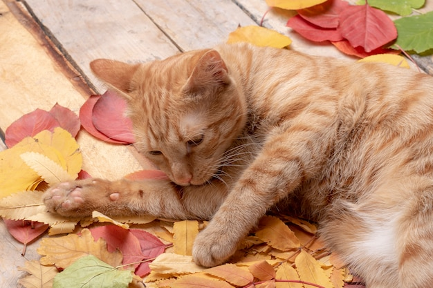 Autumn leaves über hölzernem. mit copyspace