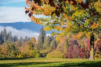 Autumn Maple-Bäume bei Stanley Park in Vancouver, britisches Columnbia, Kanada