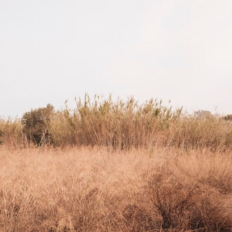 Autumun landschaft mit einem weizenfeld
