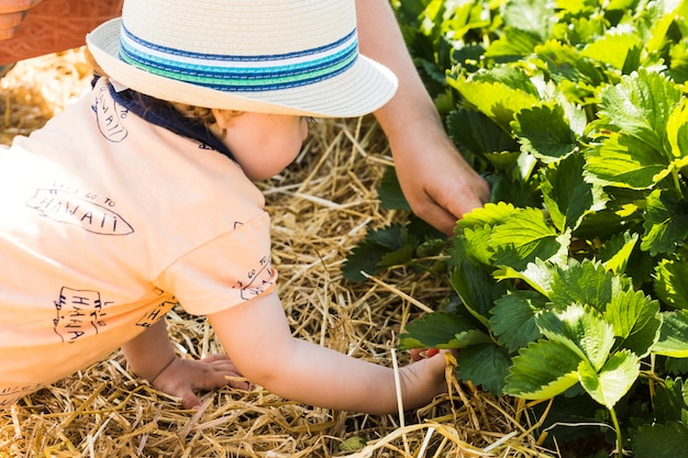 Baby mit strohhut-sammelnerdbeeren auf einem erdbeergebiet