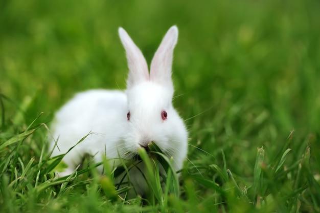 Babyweißes kaninchen im grünen frühlingsgras