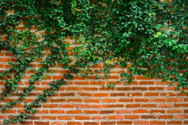 Backsteinmauer- und rebehintergrundbeschaffenheit