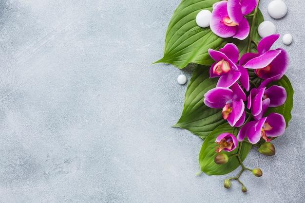 Badekurortstillleben mit schönheitsprodukten