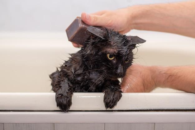 Baden mit einer nassen schwarzen katze eingeseift