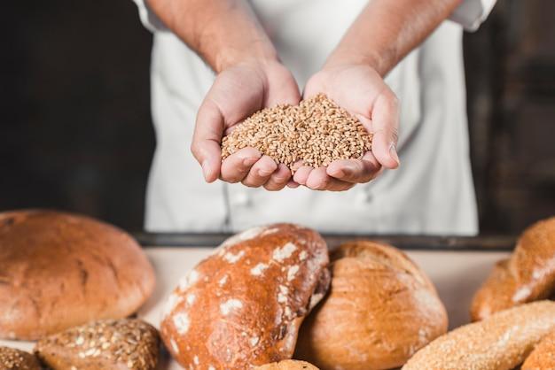 Bäcker, der weizenkörner in den händen vor gebackenem brot hält