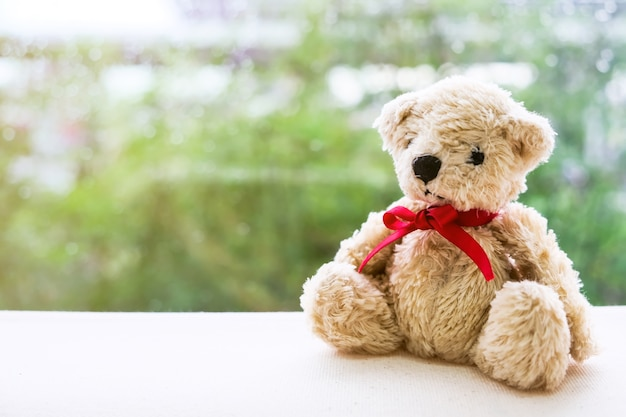 Bär stand da und schaute aus dem fenster, sei nicht traurig.