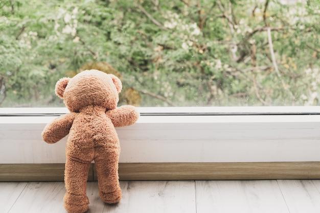 Bär stand da und schaute aus dem fenster