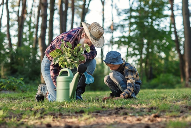 Bärtiger großvater mit seinem enkel auf grünem rasen, der eichensämling pflanzt und mit wasser gießt.