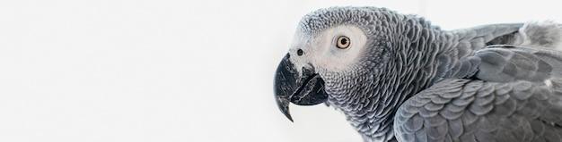 Bärtiger mann streichelt niedlichen vogel