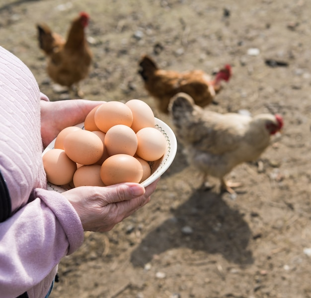 Bäuerin, die frische bio-eier hält. hühner im hintergrund