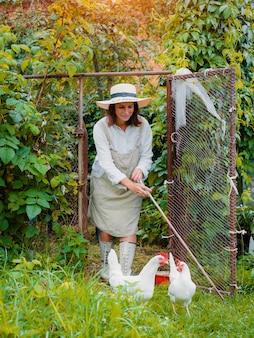 Bäuerin mit einem stock befreit freilandhühner aus dem hühnerstall auf dem grünen gras. gesunder bio-lebensstil. legehennen und haushalt im dorf.