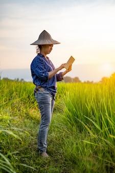 Bäuerin mit einer digitalen tablette in grünen reissämlingen auf einem reisfeld