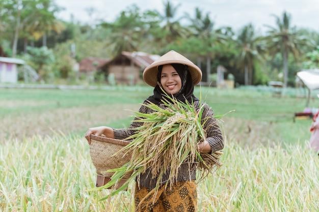 Bäuerinnen, die reispflanzen mit gewebten bambuskörben ernten, nachdem sie zusammen auf den feldern geerntet haben