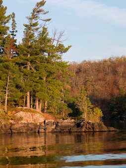 Bäume am seeufer, lake of the woods, ontario, kanada