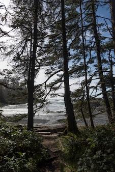 Bäume an der küste, pazifische rand-nationalpark-reserve, tofino, vancouver island, britisch-columbia, kanada