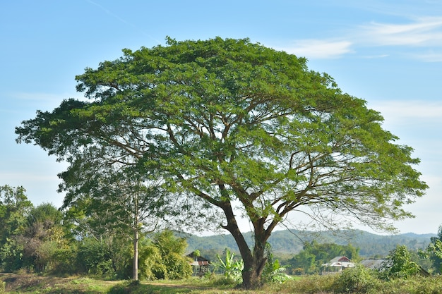 Bäume auf dem feld