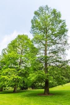 Bäume auf einer frischen wiese.
