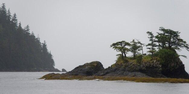 Bäume auf einer insel, regionaler bezirk skeena-königin charlotte, haida gwaii, graham insel, britisches co