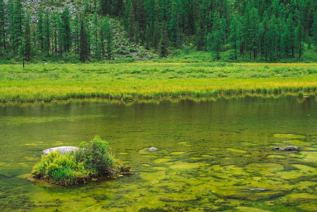 Bäume auf hügel nahe ruhigem trinkwasser. unterseite des sumpfigen stauwassers von gebirgssee. ideale glatte transparente wasseroberfläche. reiche vegetation auf stein. grüne atmosphärische natur des hochlands.