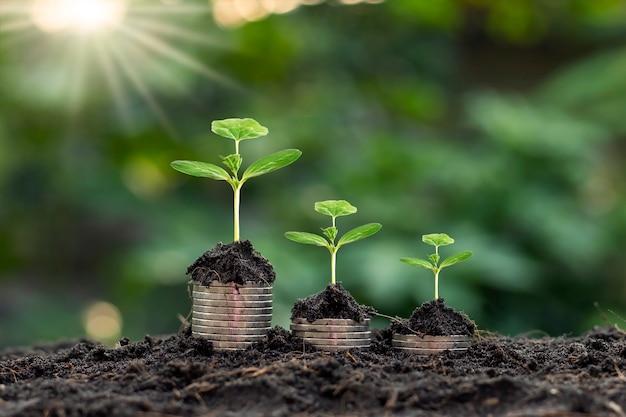 Bäume auf münzstapel pflanzen und entwickeln sowie grüne naturhintergrundunschärfe