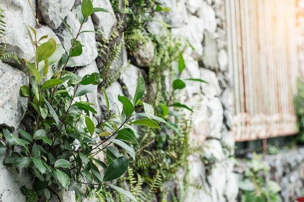 Bäume auf steinmauer in der regenzeit.