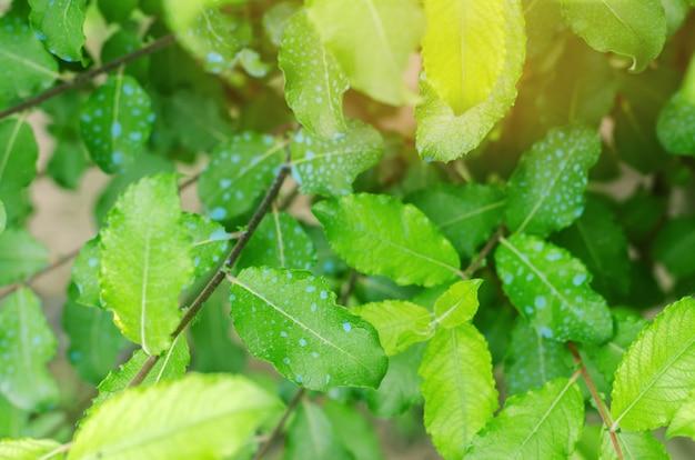 Bäume befruchten