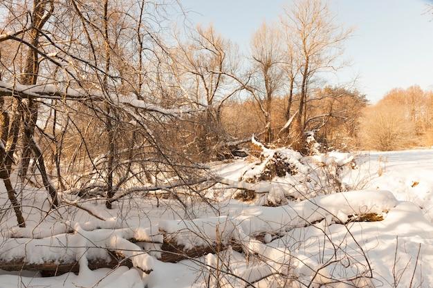 Bäume, büsche und andere pflanzen, die in der wintersaison mit schnee und frost bedeckt sind