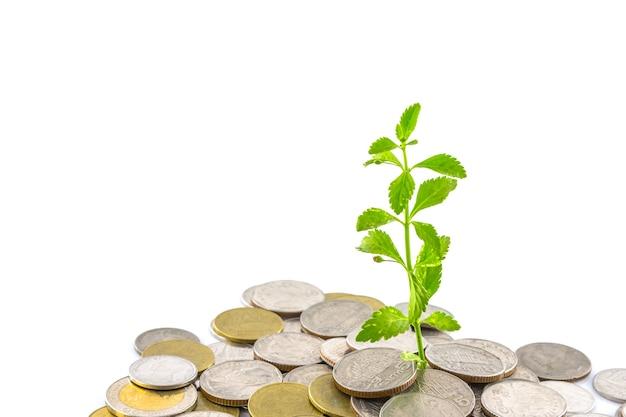 Bäume, die auf münzen, geld wachsen
