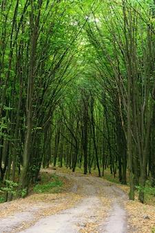 Bäume, die die straße im wald bedecken